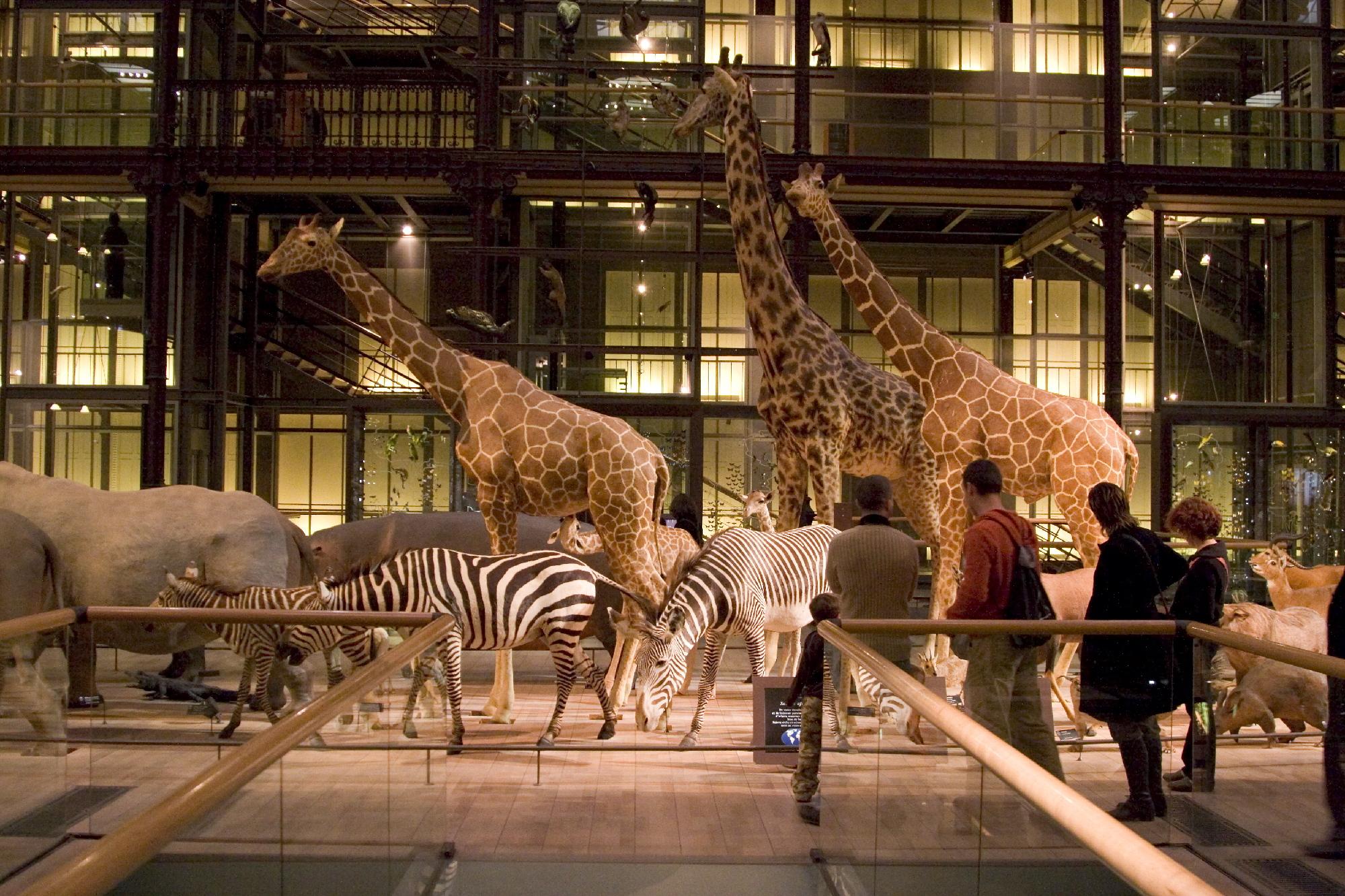 De l'histoire naturelle au Muséum