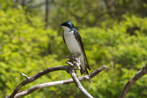 Jamaica Bay Wildlife Refuge