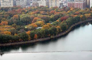Central Park Nature & Design