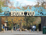 """Go to the Bronx Zoo (2300 Southern Blvd at Boston Rd; 718-220-5103, bronxzoo.com); there's a really diverse mix of people there. Or try West 4th Street, where the guys play basketball.""---Louis Isaac, 46, factory worker, Bronx"