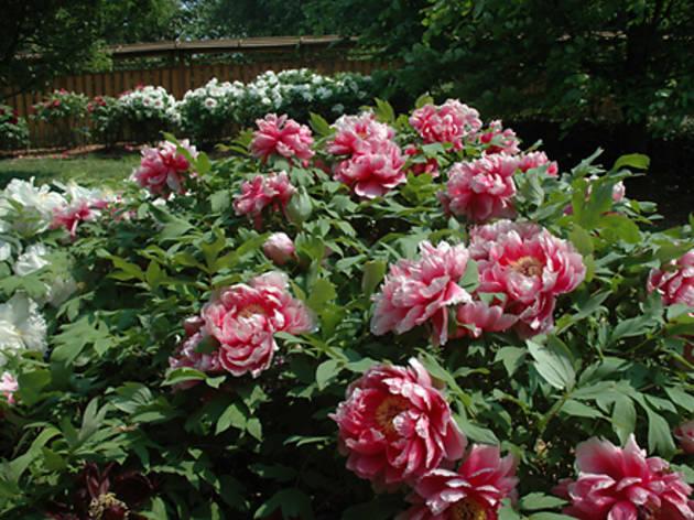 (Photograph: Marni Horwitz/Courtesy Brooklyn Botanic Garden)