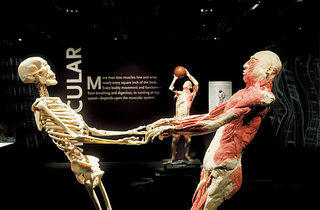 """Bodies: The Exhibition"""