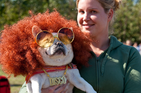 Doll up your dog at a harvest festival
