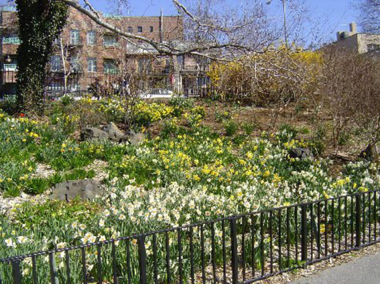 Narrows Botanical Garden