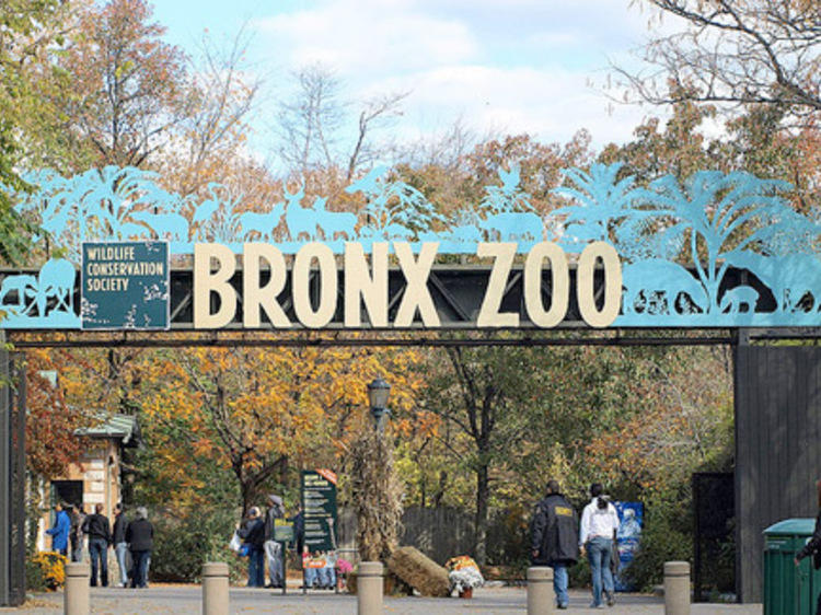 El zoo del Bronx