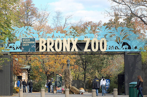 Ogle wildlife at the Bronx Zoo Wildlife Conservation Society