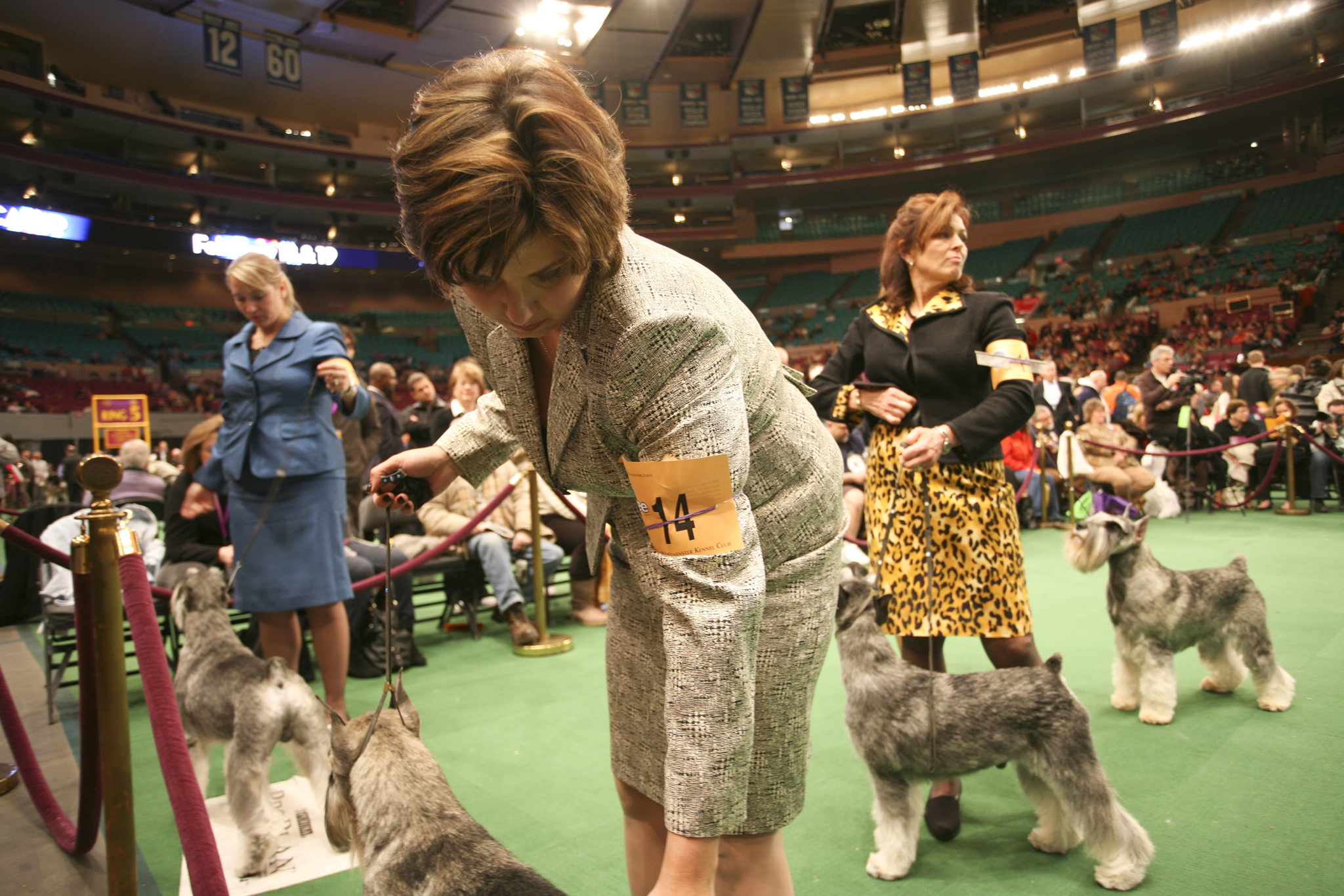 Westminster Dog Show: Day two