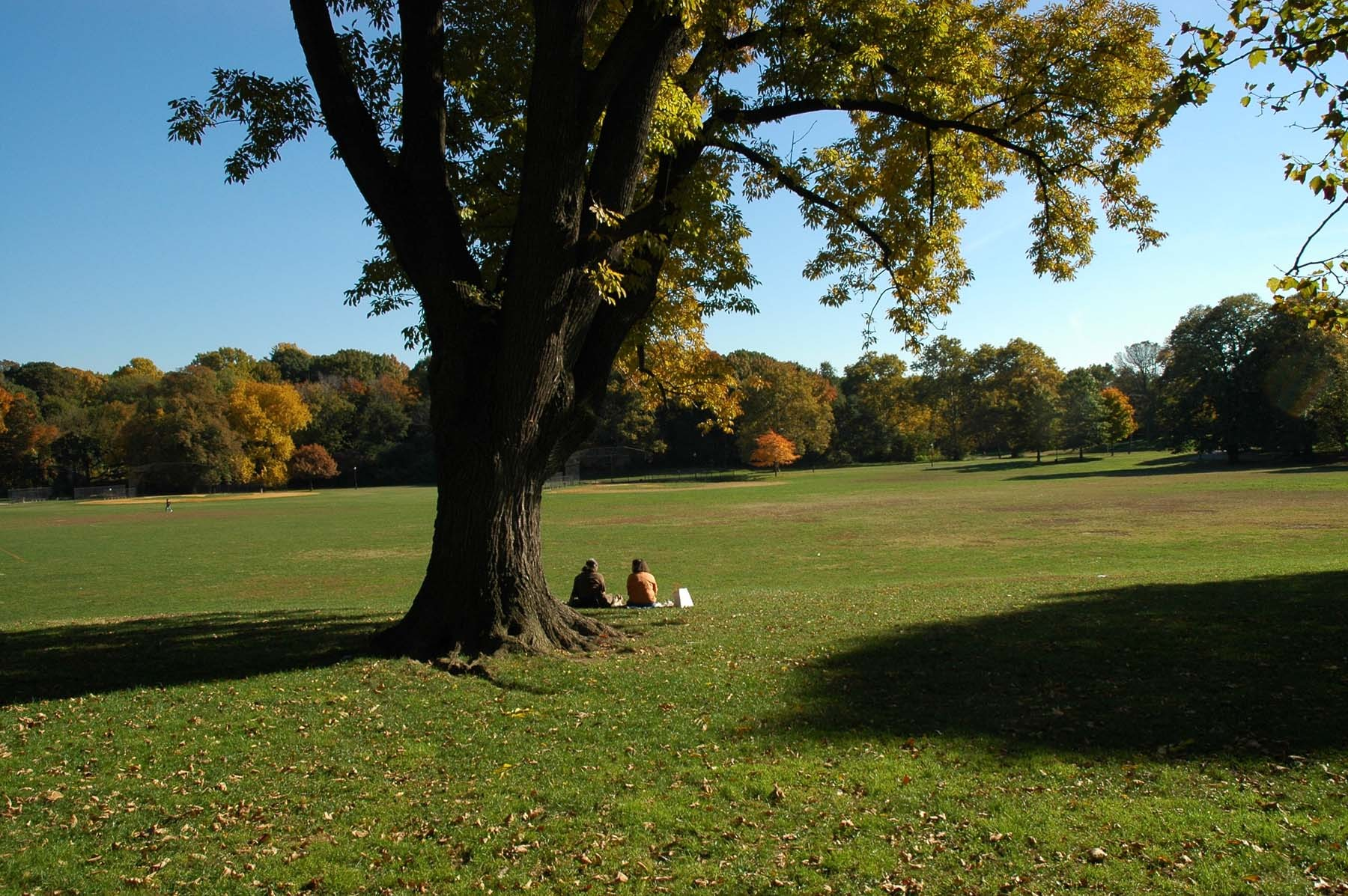 Wander through Prospect Park
