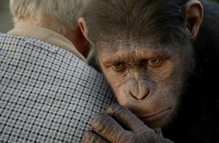 Caesar, voiced by Andy Serkis, in Rise of the Planet of the Apes 2