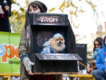 Tompkins Square Park Halloween Dog Parade Fun fact: Photos from this adorable Halloween tradition caused a raucous debate in TONY's office over dogs in costumes; some thought the practice cruel, while others (including the person writing this) think it's