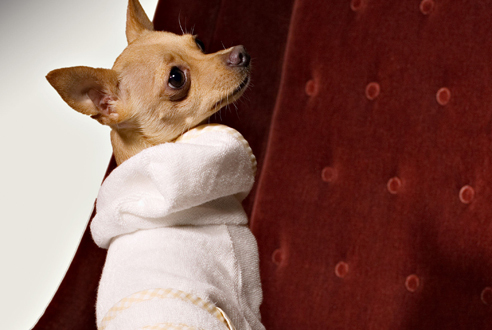 Best pet-friendly accommodation in NYC