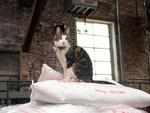Monster, the Brooklyn Brewery's cat