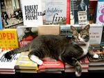 Tiny, the Community Bookstore's cat