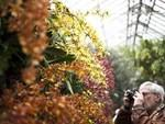 101 things to do in the spring in New York City 2013: See the blooms at the Orchid Show