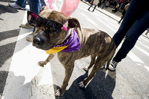 Photos: Easter Parade and Bonnet Festival (2010)