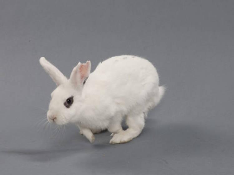 Rabbit Rescue & Rehab