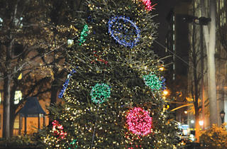 Madison Square Park Holiday Tree
