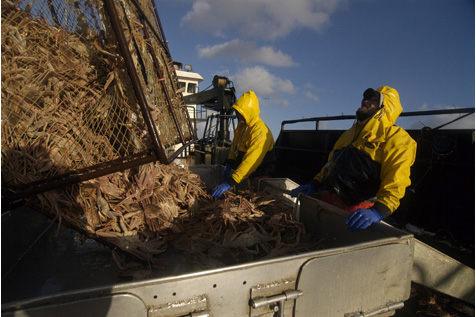 Deadliest Catch (2005–present)