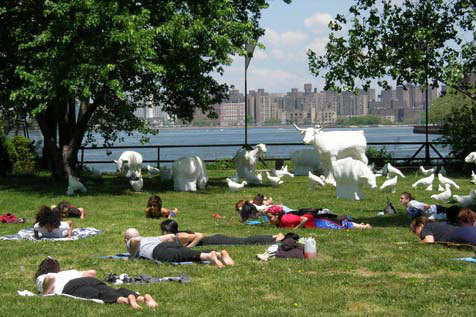 Yoga in the Park in Socrates Sculpture Park