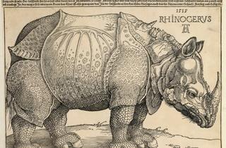 (Albrecht Dürer, 'Rhinocéros', 1515 / © Paris, Bibliothèque nationale de France)