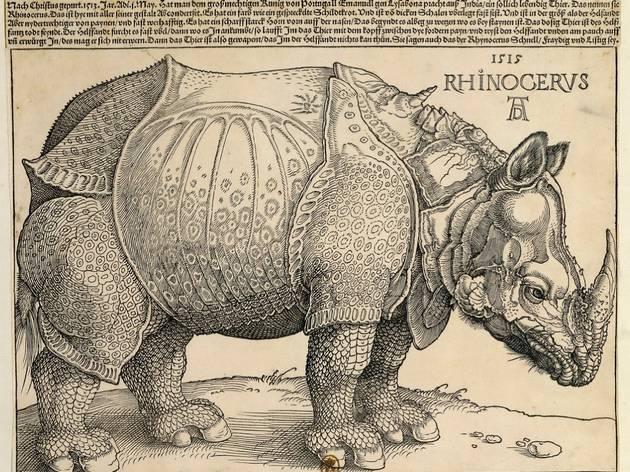 (Albrecht Dürer, 'Rhinocéros', 1515 / © Paris, Bibliothèque nationale de France)
