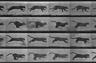 (Eadweard Muybridge, 'Animal Locomotion', Pl.720 : chat , 1887 / © Service presse Réunion des musées nationaux -Grand Palais (Musée d'Orsay))