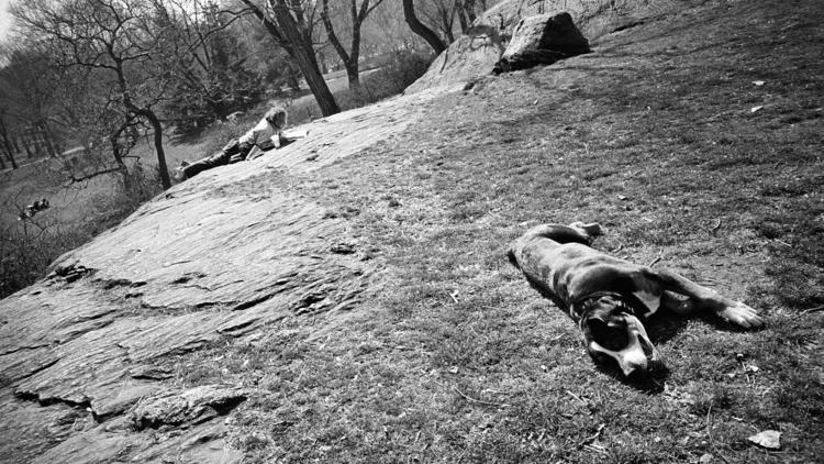 Central Park, March 2012 (Brendon Stuart 2012, Photograph: Brendon Stuart)