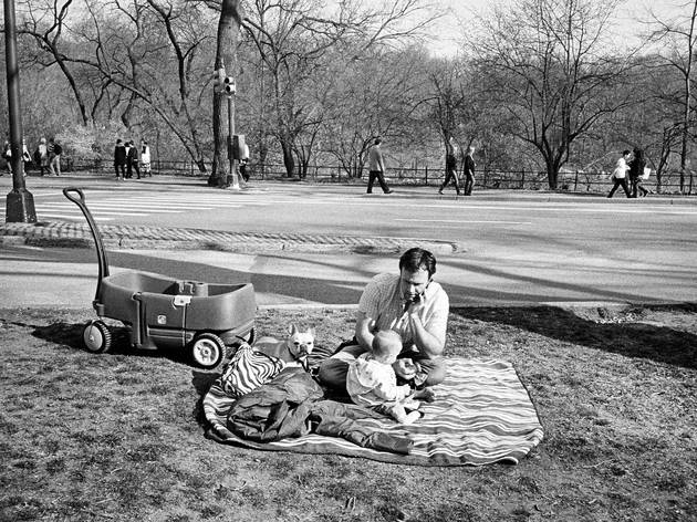 Central Park, March 2012 (Brendon Stuart 2012, Photograph: Brendon Stuart)
