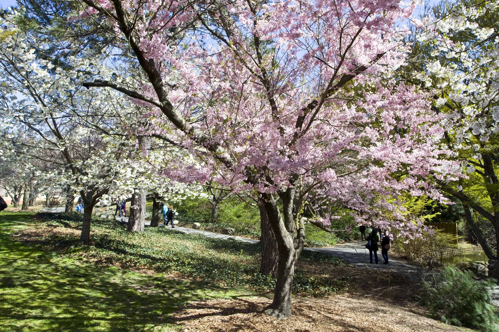 Escape the sounds of the city in the Brooklyn Botanic Garden