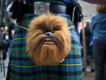 101 things to do in the spring in New York City 2013: Lose the troosers for the New York Tartan Day Parade