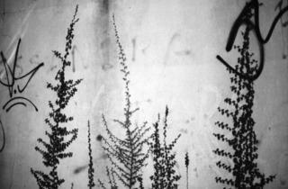 ('Untitled (tagplant 2)', 2005 / © Anri Sala, 2011 / Courtesy Galleria Alfonso Artiaco, Naples)