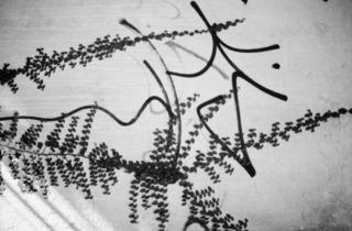 ('Untitled (tagplant 1)', 2005 / © Anri Sala, 2011 / Courtesy Galleria Alfonso Artiaco, Naples)