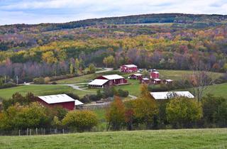 (Photograph: Courtesy Farm Sanctuary)