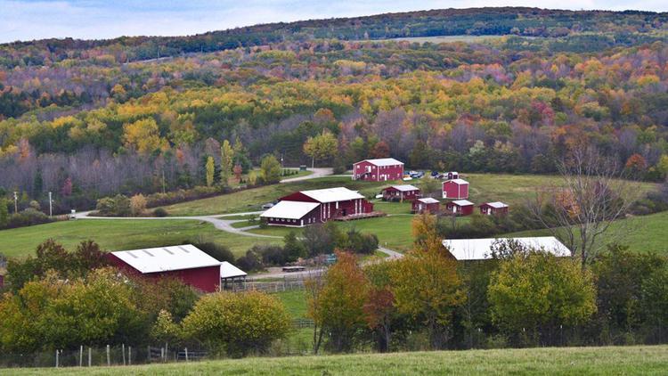 Photograph: Courtesy Farm Sanctuary