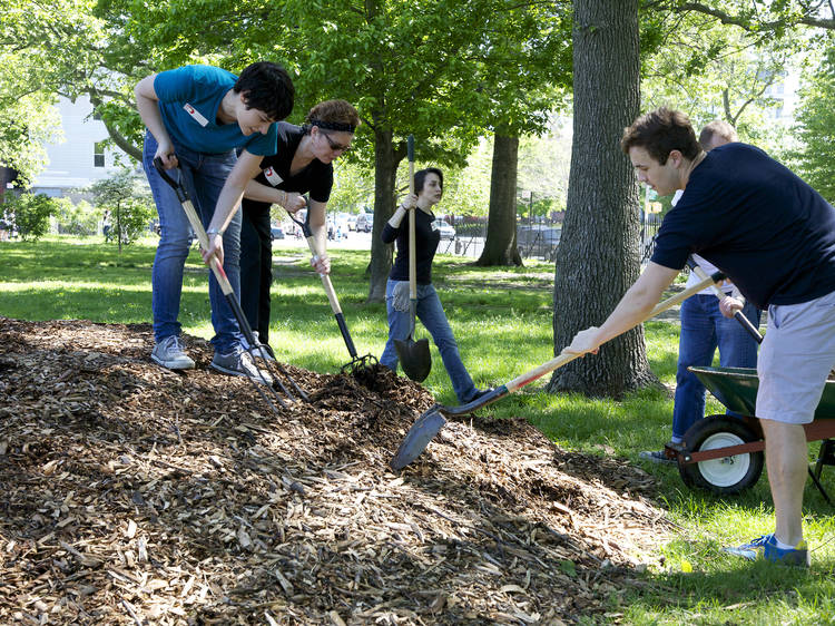 Volunteer with an eco-friendly organization