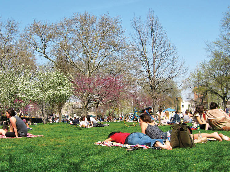People lounging on a grassy lawn in an NYC park