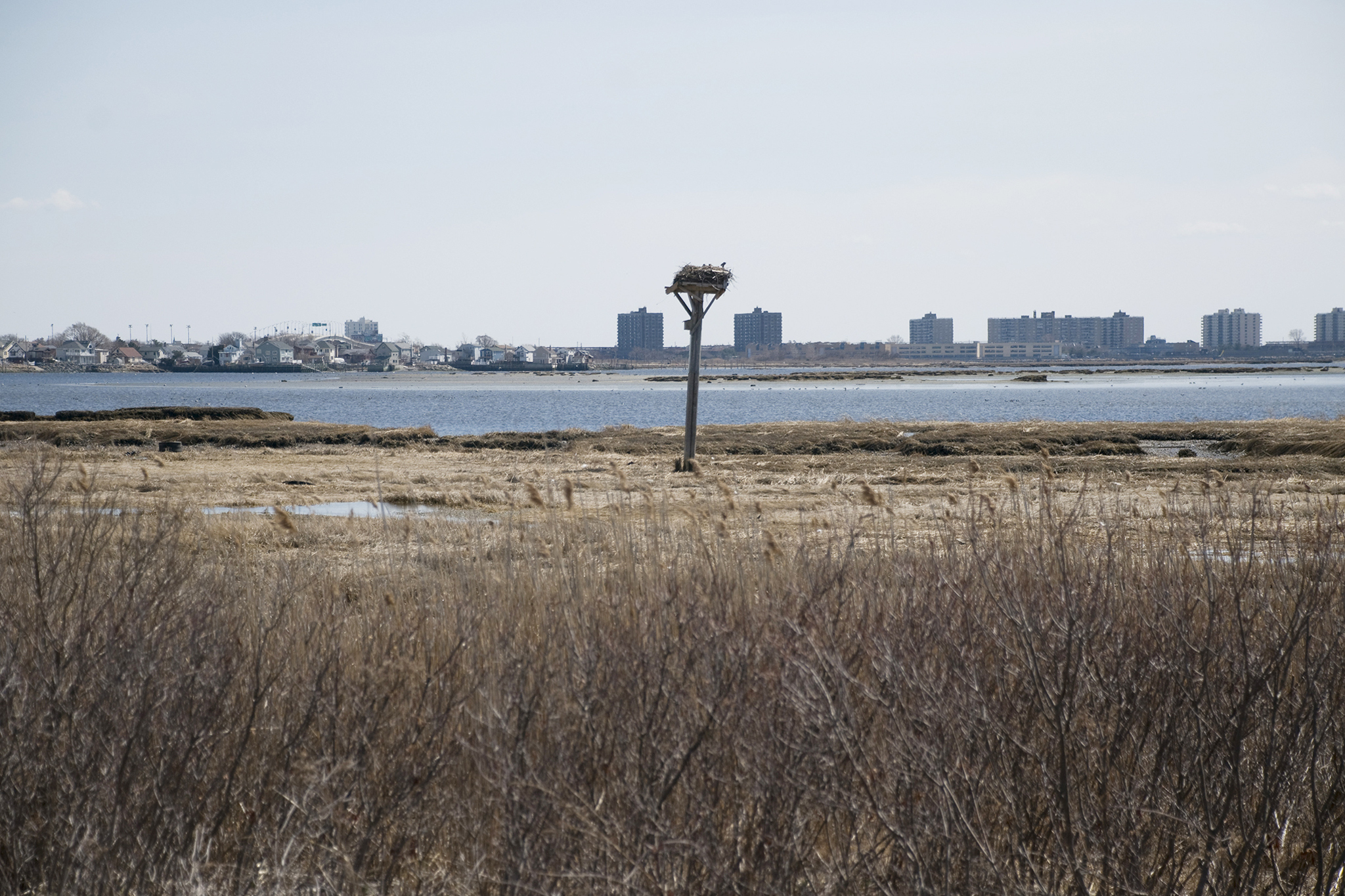 Bird-watch at Jamaica Bay Wildlife Refuge and camp at Floyd Bennett Field