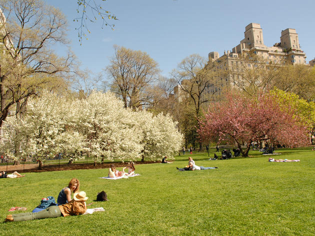 East Green in Central Park, one of our favorite places to picnic in Central Park