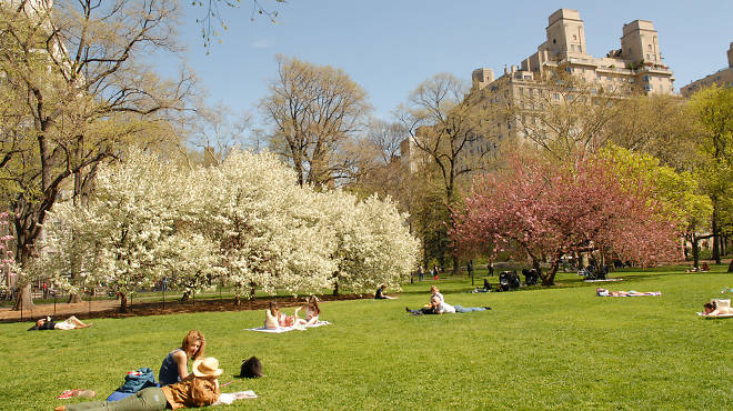 Central park in new york city best picnic spots