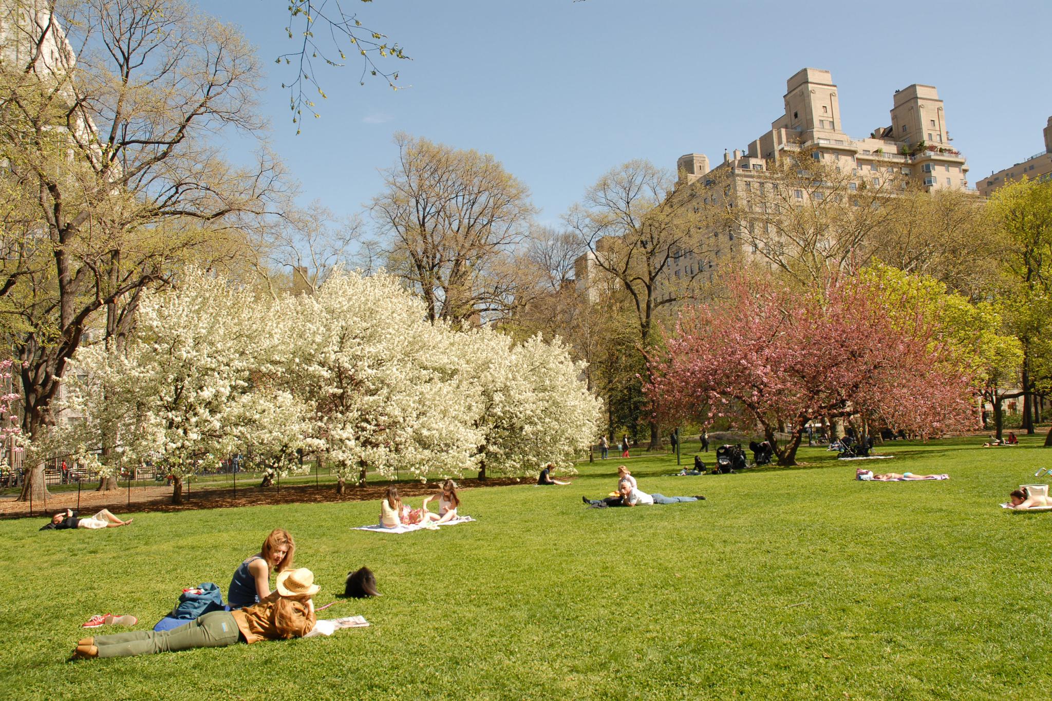 Picnic spots in Central Park