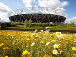 Flowers in bloom in the parkland's area of the Olympic Park looking towards the Olympic Stadium.