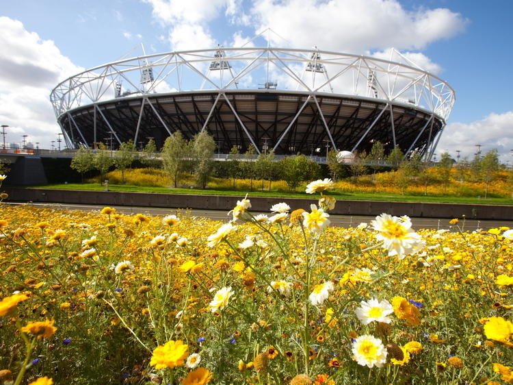 Go swimming at the Olympic Park