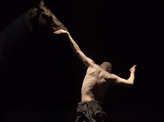 Le Centaure et l'animal (Nabil BOUTROS/WikiSpectacle)