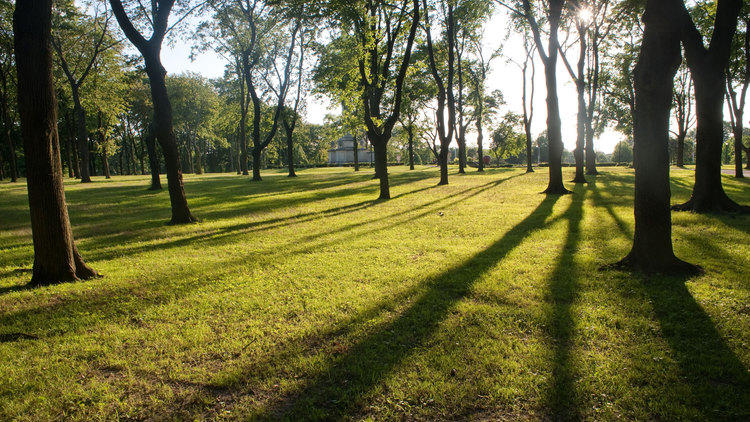 The best NYC parks