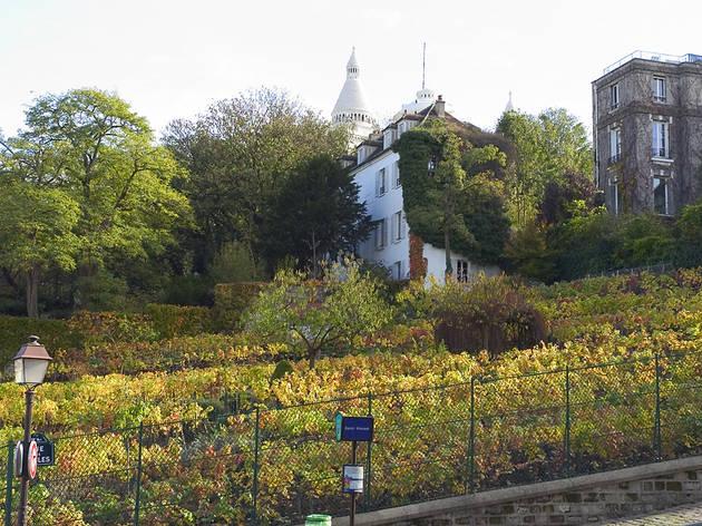 (Vignes de Montmartre / © Paris Tourist Office - Amélie Dupont)
