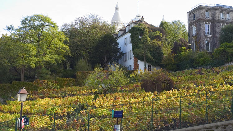 Vignes de Montmartre / © Paris Tourist Office - Amélie Dupont