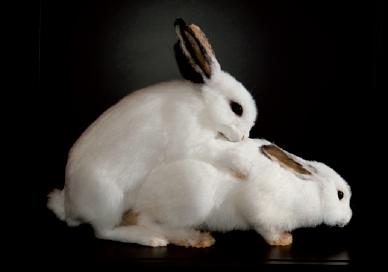 Bêtes de sexe, séduction dans le monde animal