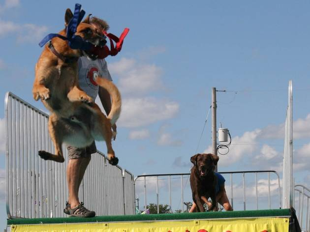 See dogs fly at Historic Richmond Town Fair