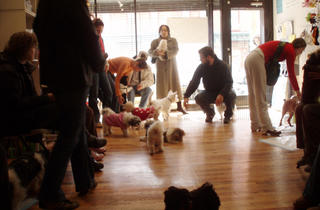 Kiki's Pet Spa & Boutique