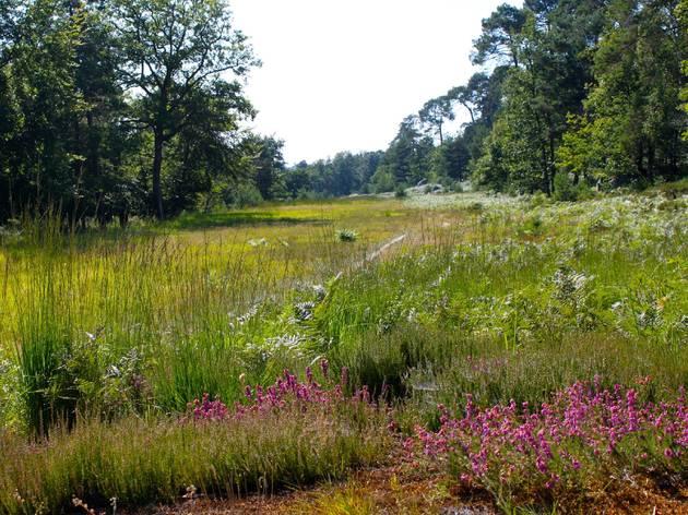 (Forêt de Fontainebleau / © Time Out Paris - C.G.)